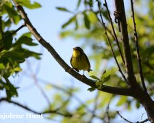 Prioritizing Areas for the Threatened Canada Warbler in Atlantic Canada
