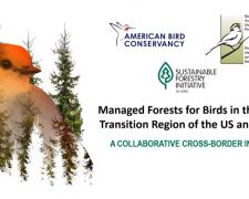 Webinar: Managed Forests for Birds in the Boreal Transition Region of the US and Canada